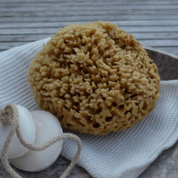Picture of Cocoon Honeycomb Wool natural sponge