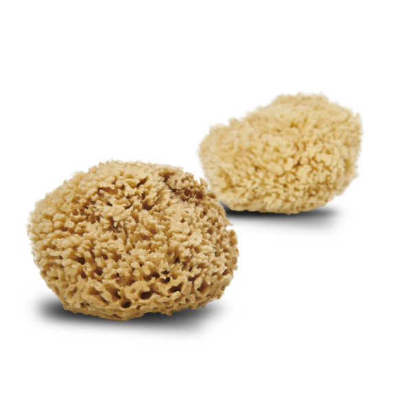 Picture of Cocoon Honeycomb Wool natural sponge from the Mediterranean Sea