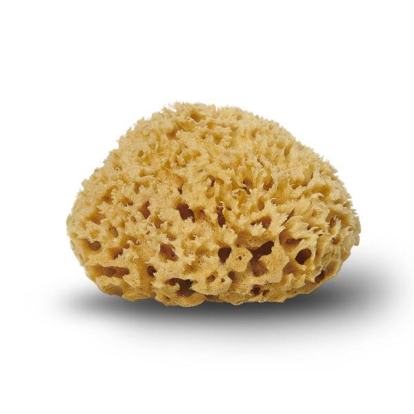 Billede af Cocoon Honeycomb natursvamp fra Middelhavet