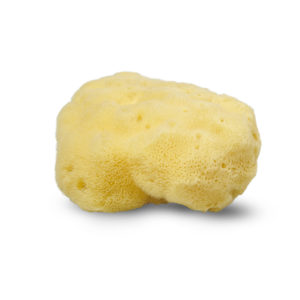 Picture of Cocoon - Large silk sponge nature sponge from the Mediterranean Sea
