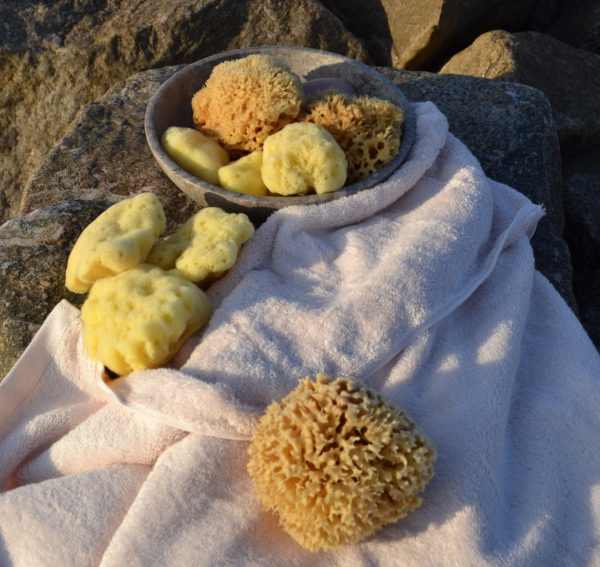 Pictures of natural sponges